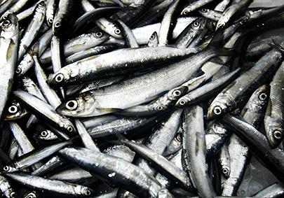 Kala on tärkeä proteiininlähde. Kuva: Petteri Kivimäki