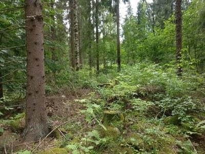 Jyväskylässä edistetään metsien käytön kestävyyttä