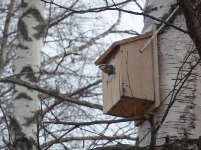 Lintujen varhaiskevään muutto on jopa hieman etuajassa, myös talvihorroksesta herännyt siili on nähty liikkeellä Jyväskylässä