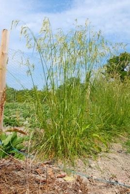 Sienikumppani auttaa kasvia kasvamaan ja torjumaan uhkia