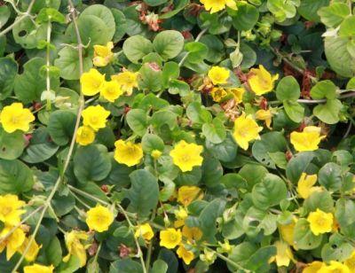 keltainenkukka.jpg