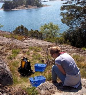 Ant fieldwork