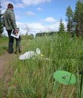 Plantaginis field experiment