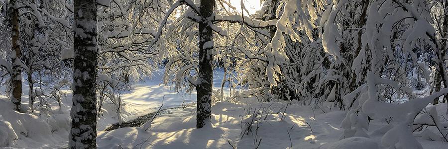 winterwonder.jpg