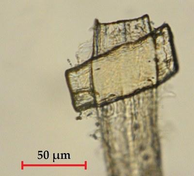 microscope_image.JPG